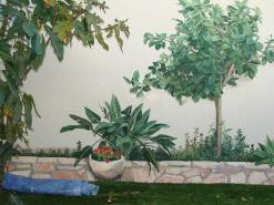 ציורי קיר תלת מימדים של עץ ועציץ
