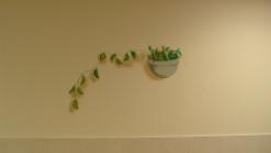 ציור קיר תלת מימד עציץ עם צמח
